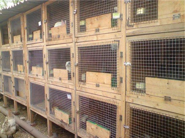 Изготавливаем шеды для кроликов: фото, видео и чертежи