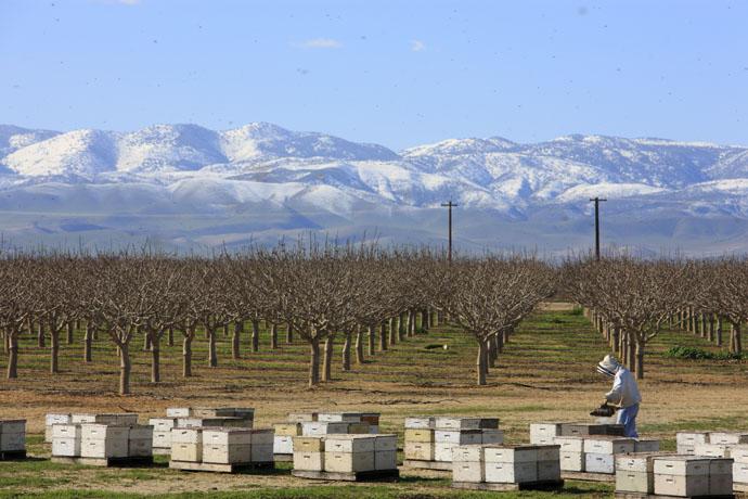 Какую пользу приносят пчелы растениям собирая нектар