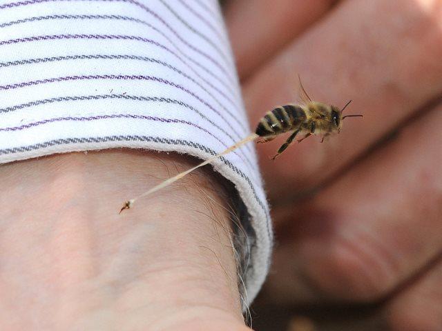 Лечение укусами пчелы