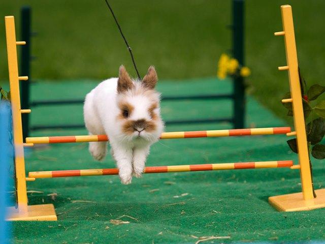 Кролик тренируется на улице