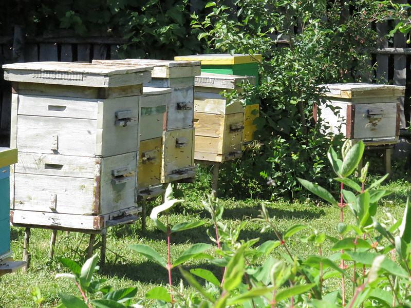 Содержание пчёл в двухкорпусных ульях