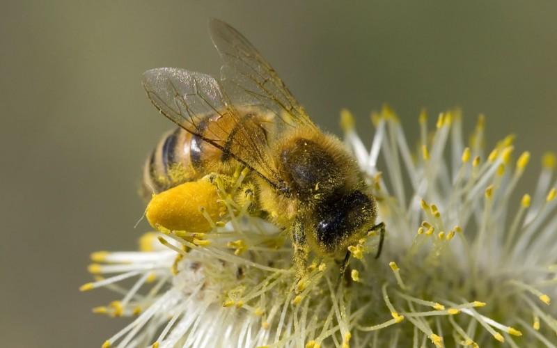 Стимовит для пчел: инструкция по применению и видео