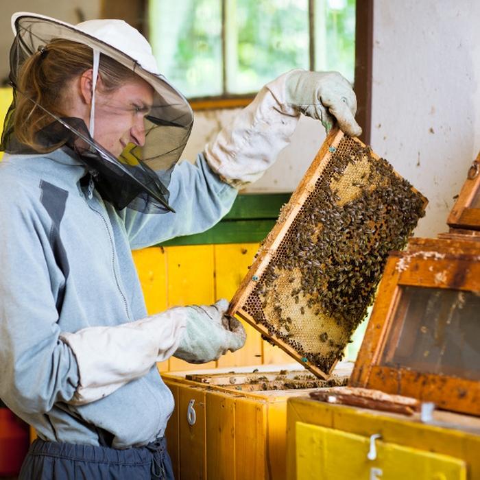 Инвентарь пчеловода и пасечные приспособления: обзор видов
