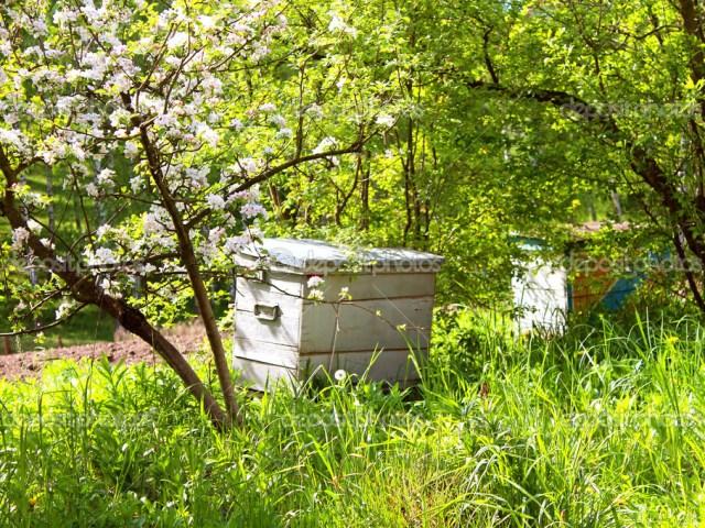 Ульи в цветущем саду