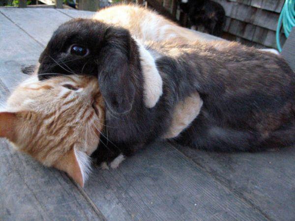 Рыжий кот и его новый друг