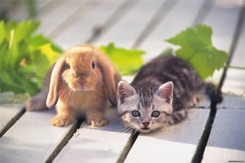 Серый котёнок и рыжий крольчёнок