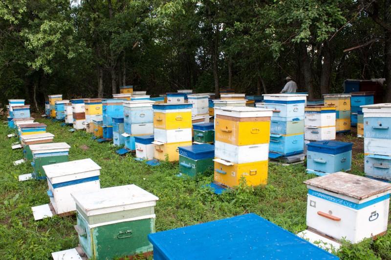 Особенности развития пчеловодства в Харьковской области: обзор пасек и видео