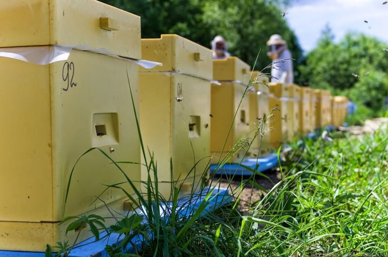 Закон о пчеловодстве 2016: основные положение и изменения в проекте