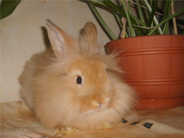 Кролик сидит возле горшка с цветком