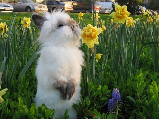 Карликовый белый кролик стоит в траве
