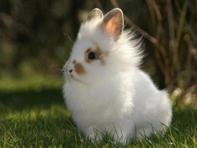 Белый львиноголовый кролик в траве