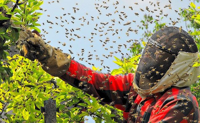 Пчеловод и рой пчел вокруг