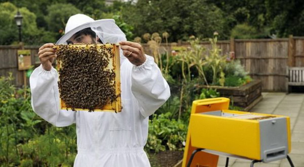 Пчеловод осматривает пчел