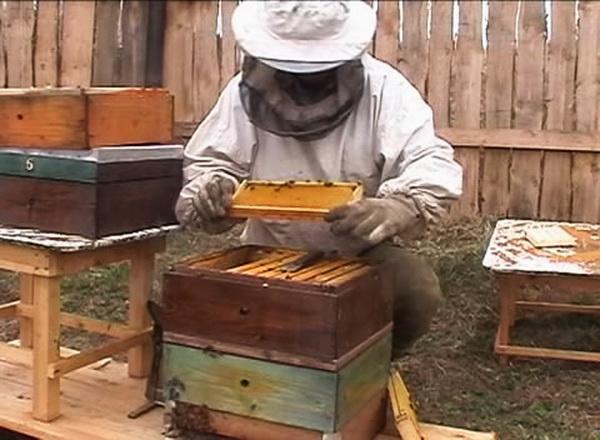 Пчеловод работает с рамками