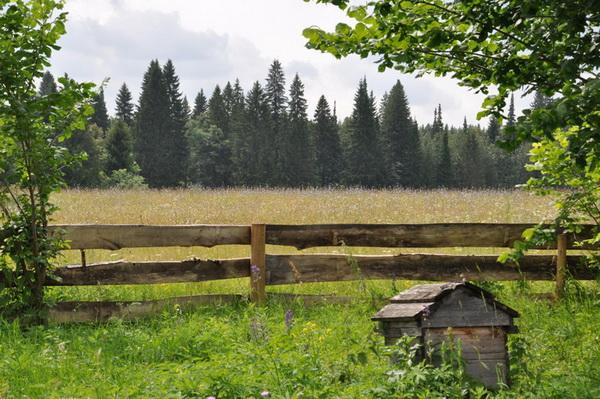 Пчеловодство в Кировской области: особенности, обзор пасек и видео