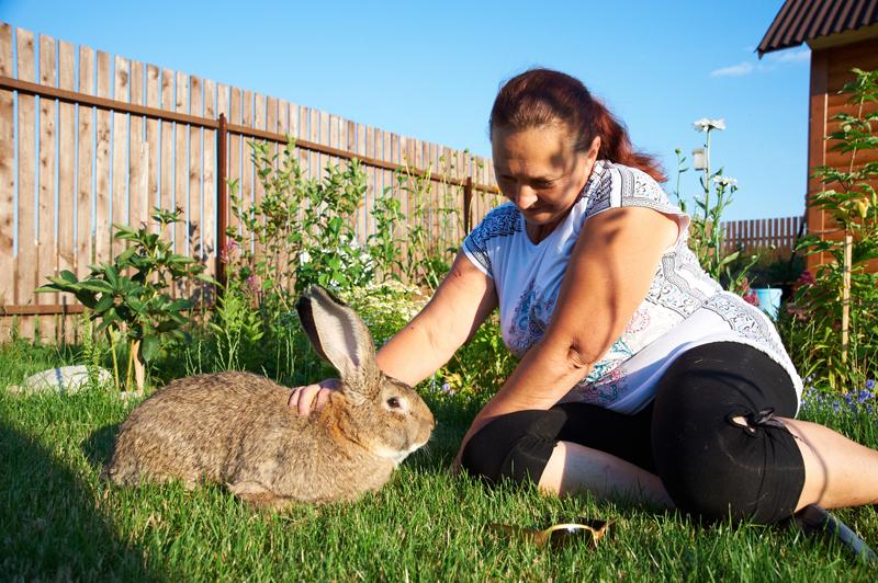 Кролик породы Ризен с хозяйкой