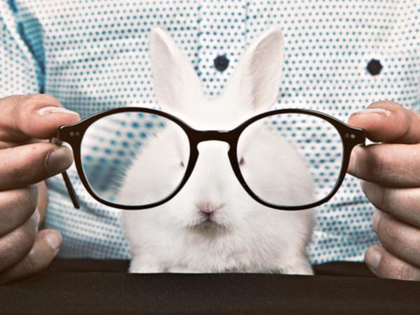 Белый кролик в очках