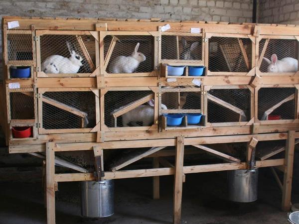 Клетки с кроликами на домашней ферме