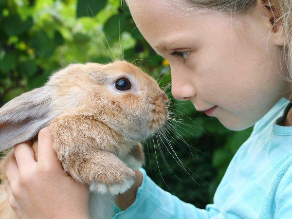 Декоративный кролик в руках у девочки