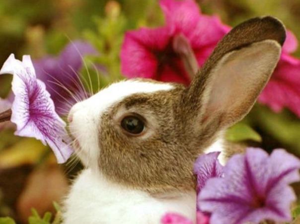 Красивый кролик нюхает цветы