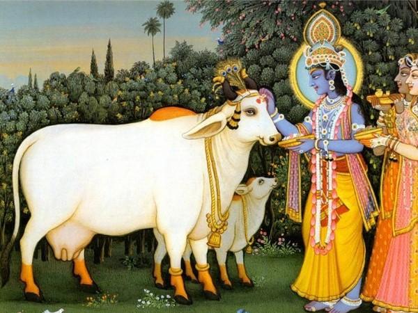 Изображение священной коровы и индийского божества