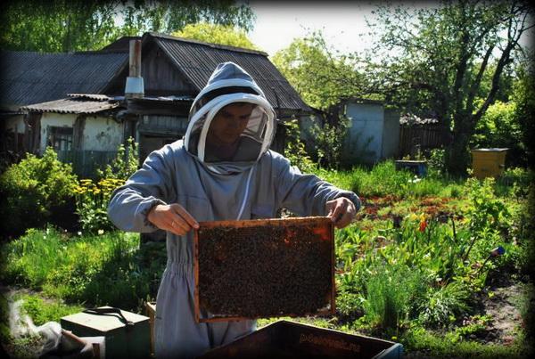 Пчеловод в защитном комбинезоне