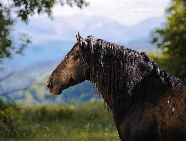 Карачаевская порода лошадей, ее описание, особенности, фото и видео
