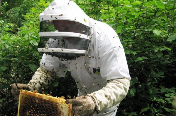 Пчеловод в костюме работает с рамкой