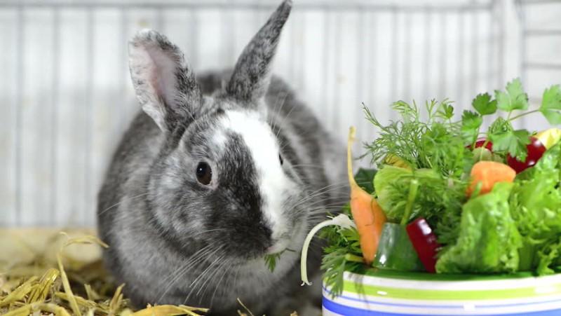 Кролик возле мисочки с лакомством