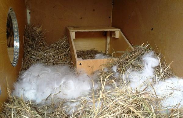 Гнездо для окрола