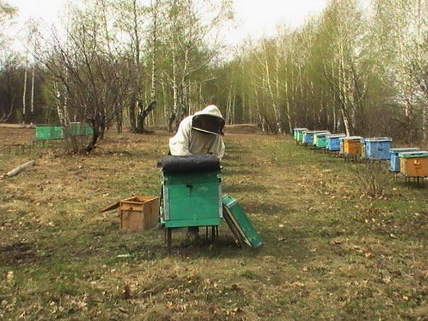 Пчеловод готовит улей к дезинфекции