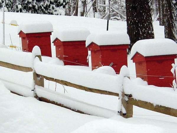 Зимовка ульев под снегом в Сибири