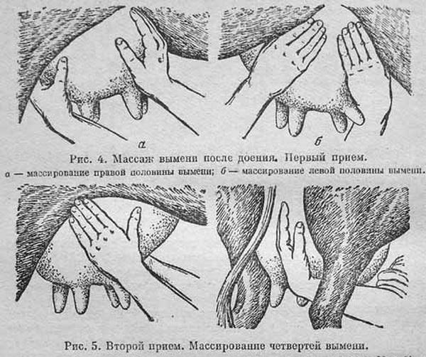 Схема проведения массажа долей
