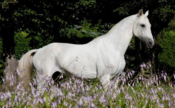 Терской конь в цветах