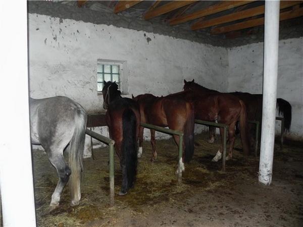 Домашние кони в стойле