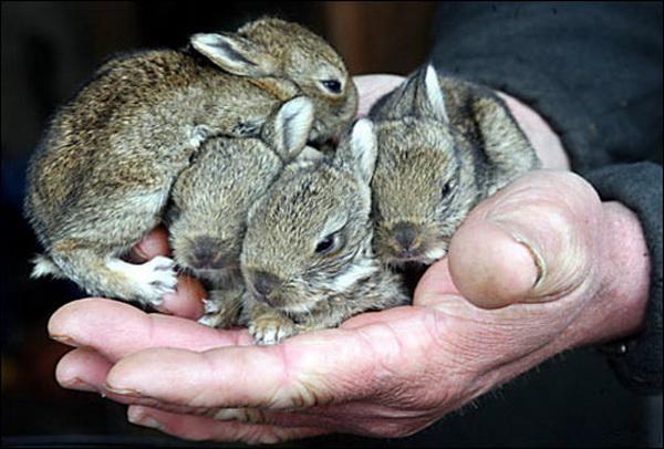 Крольчата на руке