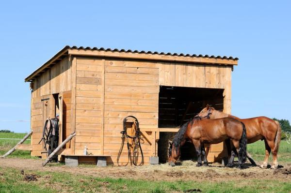 Рабочие кони возле конюшни