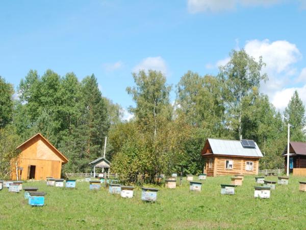Ульи возле деревянных домиков