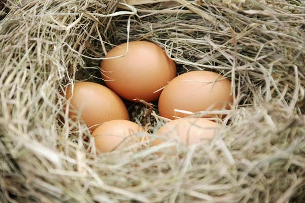 Куриные яйца в гнезде