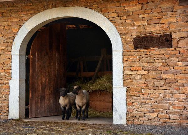 Капитальная овчарня с двумя овцами