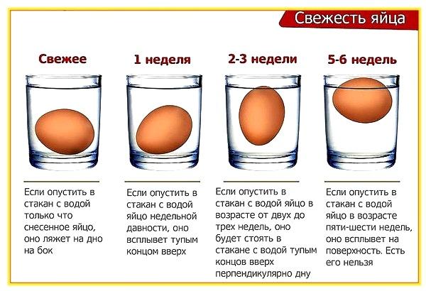 Схема проверки свежести яиц