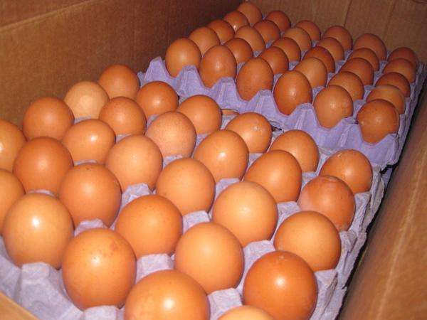 Яйца курицы браун ник