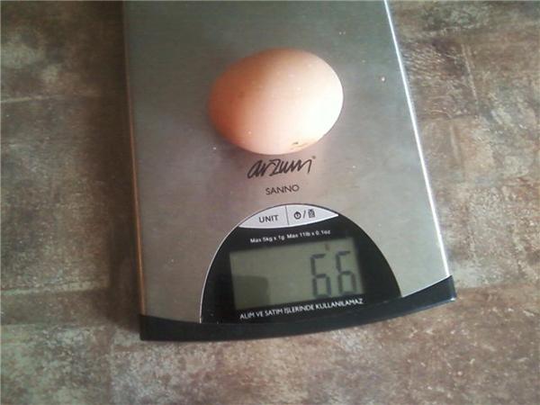 Яйцо ливенской курочки на весах