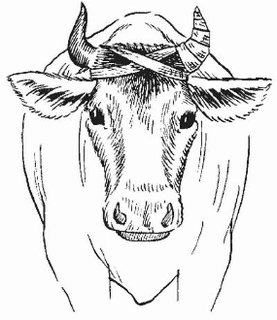 Схема перевязки рога