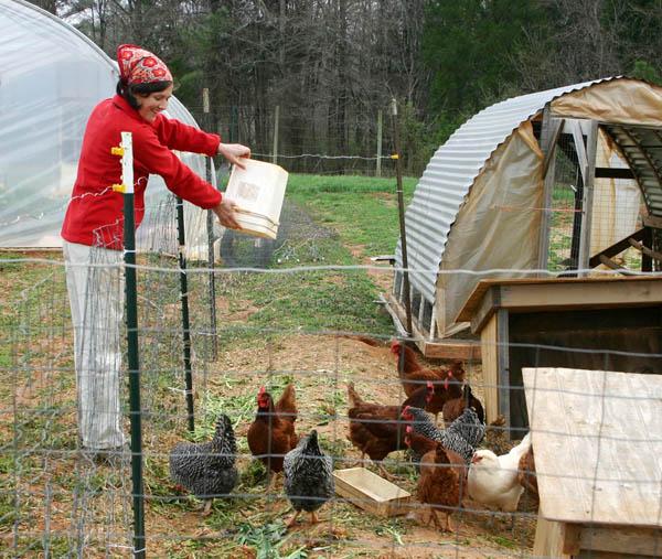 Птице насыпают корм