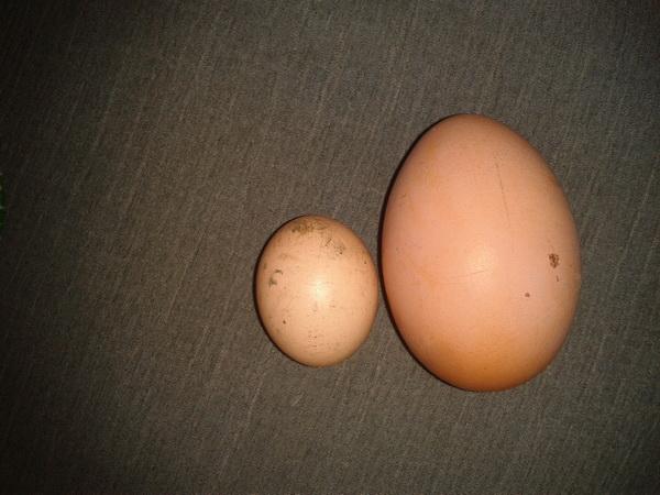 Крупное и мелкое яйцо