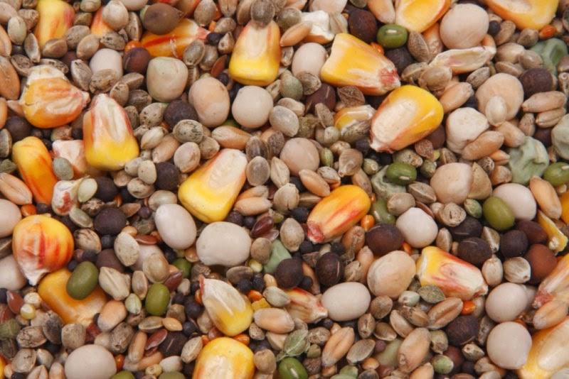 Зерновая смесь из разных злаков