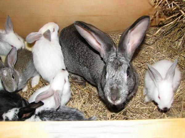 Крольчиха с малышами